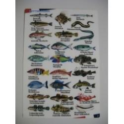 viskaart Middenlandse Zee